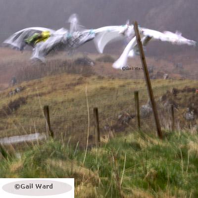 Gail Ward Photography for Cheam Camera Club © Gail Ward