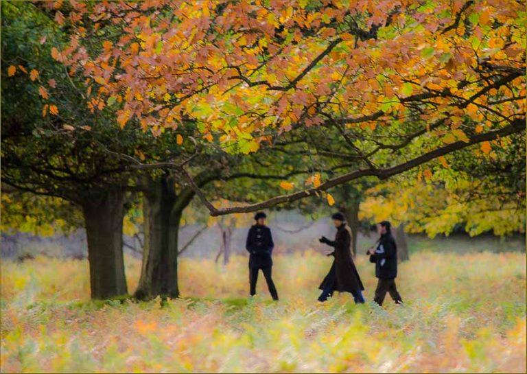 152 Autumn Stroll