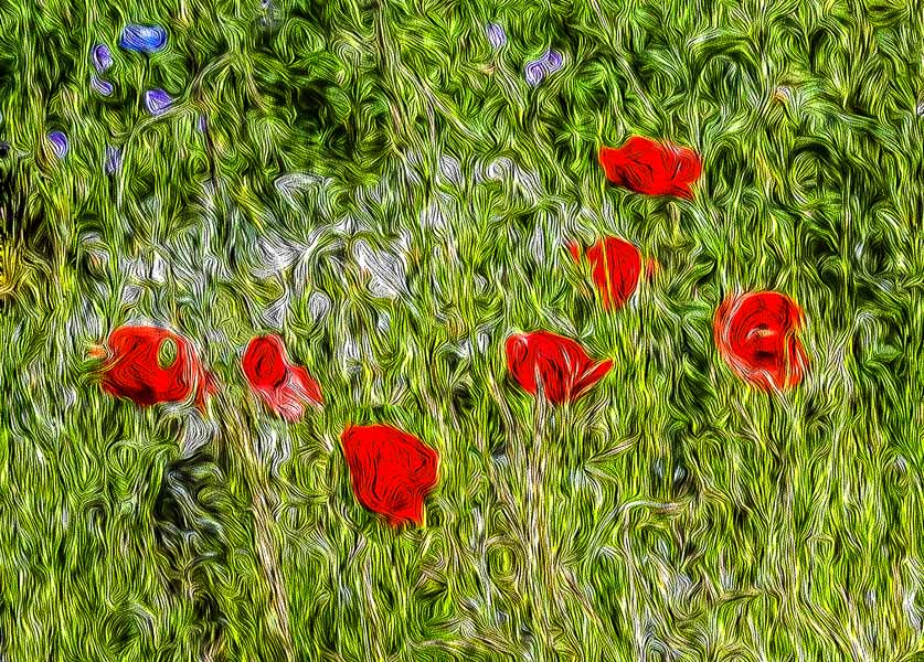157 Impressionistic Poppies
