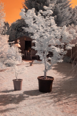 InfraRed image, with no filter