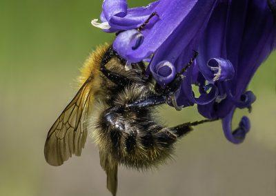 Debbie Arnell - Busy bee