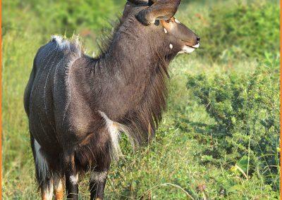 Gary Weaving - Kudu