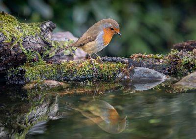 Jonathon Bartle - Reflecting Robin