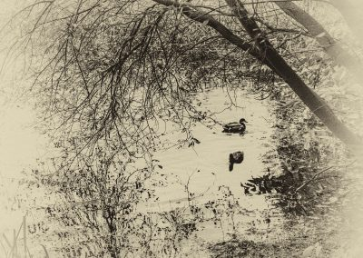 Marion Guess - A Quiet Pond
