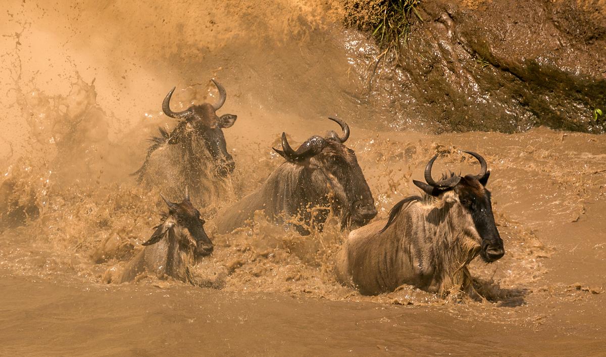 Martina Bennellick - Wildebeest Migration
